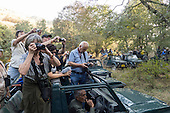 Sawai Madhopur, Rajasthan, India. Ranthambore National Park, Tourists tiger watching.