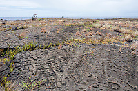 Petroglyphs at the Pu'u Loa Petroglyph Field in Hawai'i Volcanoes National Park, Big Island.