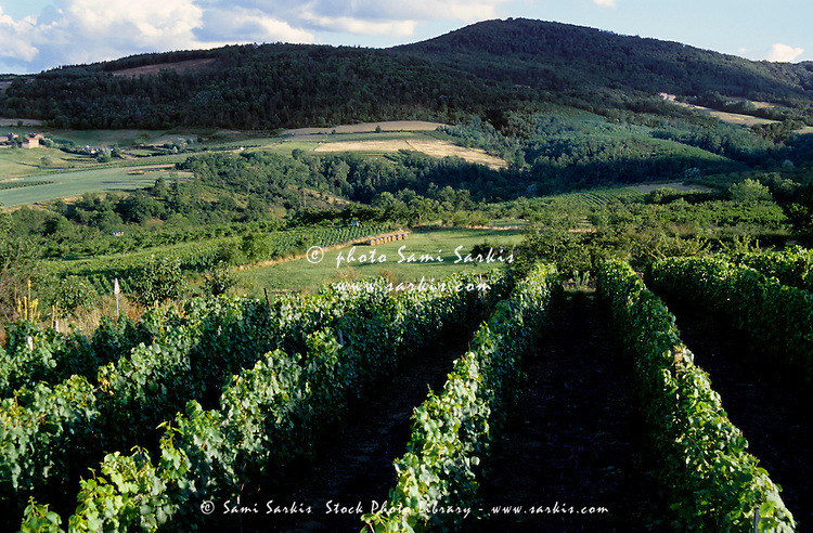 Vineyards and cultivated landscape of Vinzieux Village, Rhone River Valley, France.