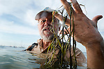 Holding strands of loose native pondweed that floated to the surface, Steve Carpenter, professor of zoology and director of the Center for Limnology at the University of Wisconsin-Madison, is pictured in Lake Mendota near the campus shoreline on July 29, 2009. Carpenter says that native pondweed -- an important fish habitat common in the early 1900s and almost lost by 1980 -- is now making a comeback. Most people are less aware of native pondweeds because the species grows far under the surface of the water. Native pondweeds should not be confused with the invasive Eurasian Watermilfoil, which grows on the surface of some Wisconsin lakes and interferes with boating, fishing and swimming.