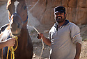 A PIECE OF JORDAN - TRAVEL FEATURE. HORSE GROOMING WITH  MOSA'AD NASARAT . PHOTO BY CLARE KENDALL. 07971 477316.