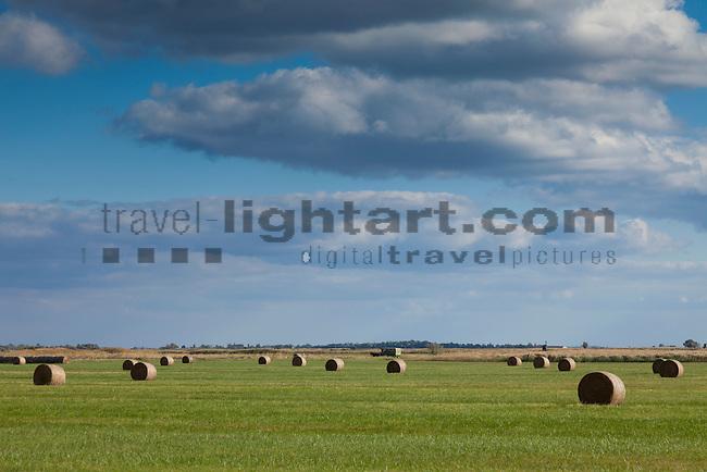Heuernte, hay harvest, Illmitz, Nationalpark Neusiedlersee, Seewinkel, Bezirk Neusiedl am See, Burgenland, Austria, Österreich.