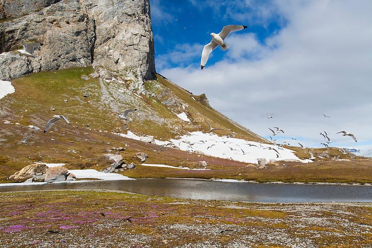 Gnalodden, Norway, Svalbard