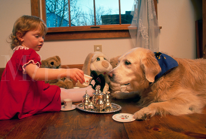 Little girl has a tea party for her golden retriever and her stuffed animals.