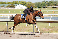 #87Fasig-Tipton Florida Sale,Under Tack Show. Palm Meadows Florida 03-23-2012 Arron Haggart/Eclipse Sportswire.