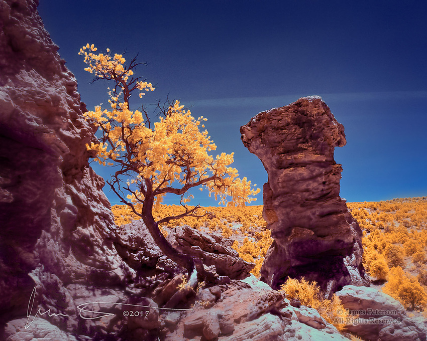 Hoodoo in Vermilion Cliffs National Monument (Infrared) ©2017 James D Peterson.  This rugged outcrop is alongside Double Barrel Arch in far northern Arizona.