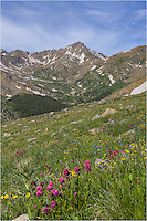 Reds and golds of Colorado Wildflowers blanket the sides of Mount Massive in this Colorado image. This was the scene of our hike to the summit of one of Colorado's highest 14ers.