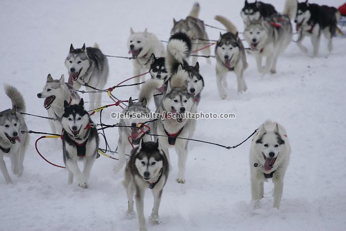 Karen Ramstead's team on trail shortly after leavingWillow Restart .  2005 Iditarod Sled Dog Race