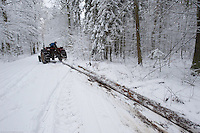 Tree cutting, Bialowieza, Poland. February 2009