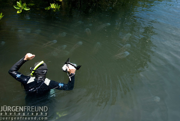 Jurgen Freund photographing box jellyfish in the mangroves