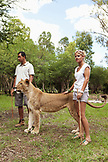 MAURITIUS, Flic en Flac, tourist, Samantha Luyt from South Africa, stands by the side of a lioness at Casela Nature and Leisure Park in western Mauritius