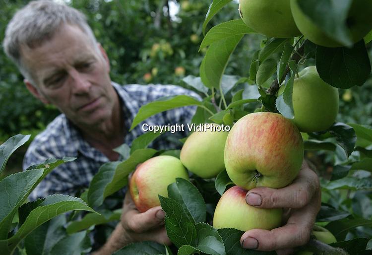 Foto: VidiPhoto..DRIEL - Fruitteler Piet van Bentum is woensdag begonnen met de oogst van zijn zomerappels, Delcorf. Zowel de kwaliteit als de productie zijn beter dan vorig jaar, hoewel de oogst door de late vruchtzetting in het voorjaar dit jaar wat later is. Zomerappels zijn er niet veel in Nederland. De totale oogstverwachting van de Nederlandse fruittelers is met 392 miljoen kilo appels dit jaar hoger dan vorig jaar (385 miljoen kilo). Elstar en Jonagold zijn nog steeds de belangrijkste rassen.