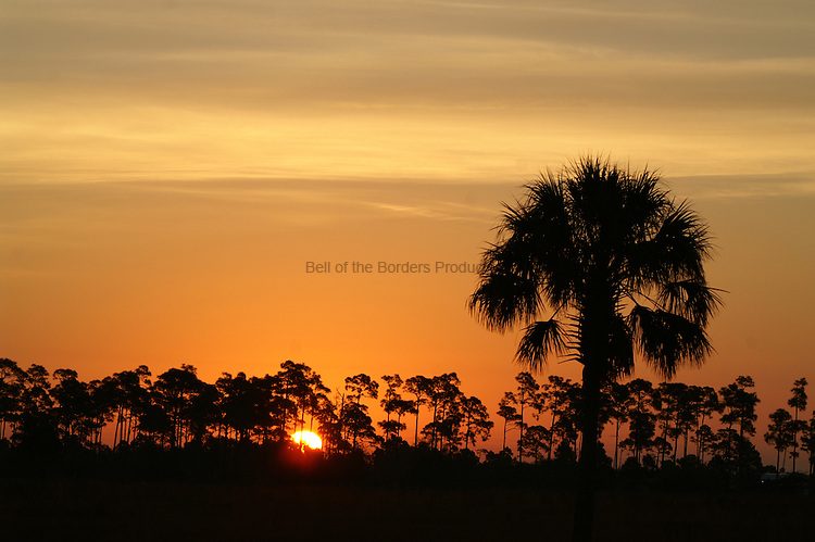 The setting sun etches the details of the palm and the pines into the horizon.