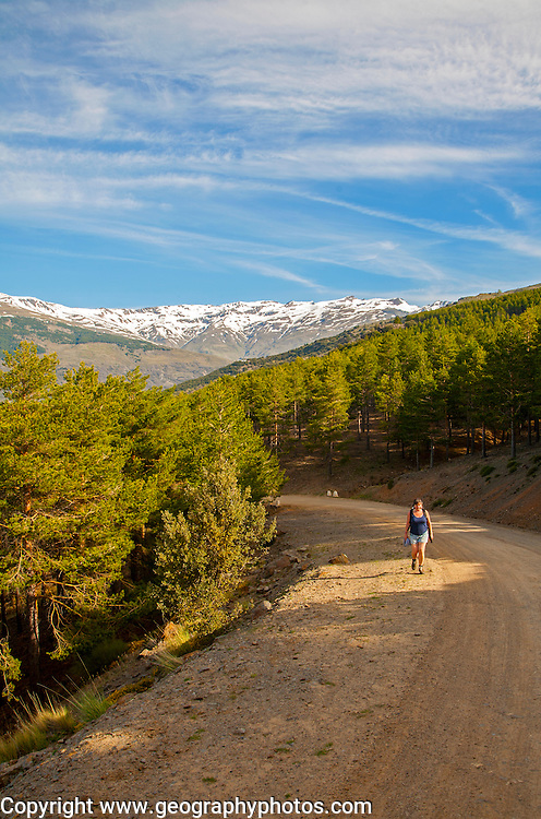 Woman walking in the Sierra Nevada Mountains in the High Alpujarras, near Capileira, Granada Province, Spain
