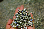 Pure nickel, in pellet form at the end of refinement at the nickel factory of Norilsk Nickel in the Artic city of Norilsk. June 13, 2007