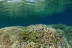 Healthy shallow coral reef