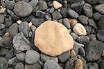 Close up of rounded beach pebbles looking down from above, Isla La Graciosa, Lanzarote, Canary Islands, Spain