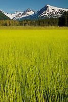 the Chugach National Forest from along the Seward Highway, Kenai Peninsula, Alaska