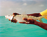 Fiji, a man holds a Travali fish in the Northern Lau Islands