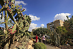 Israel, Southern Coastal Plain. The Cacti garden in Holon