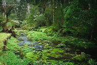 Image Ref: CA575<br /> Location: Lake Elizabeth, Forrest<br /> Date of Shot: 20.10.18