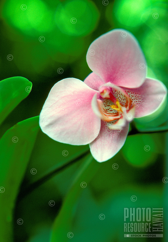 Close up of a orchid flower in a backyard garden setting