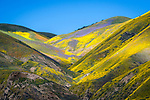 Shadows and light, colorful wildflowers cover the Temblor Range, Carrizo Plain National Monument, San Luis Obispo County, Calif.