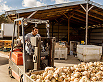 December 30, 2016. Rose Hill, North Carolina.<br /> <br /> John Dunn lifts a bin full of rutabagas to take them to storage in a warehouse owned by Cottles Organics, a farm where he has worked since he was a child.<br />  <br /> John Dunn, age 19, is currently a freshman at NC State University and is the first person in his family to go to college. With a combination of grants, loans, help from his grandfather and weekend farm work, Dunn hopes to find finish college and find a career in agriculture.<br /> <br />  Colleges and universities, which are always trying to pinpoint an under-served and sometimes underprivileged populations of students, have noted a decline in students from rural areas of the country. There are various efforts underway in colleges and universities to identify more of these kids and get them enrolled.