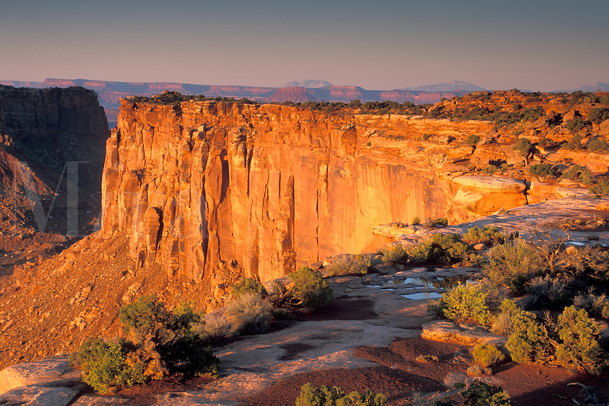 Sunrise light in morning on sheer steep golden red sandstone cliffs in the high desert, Island in the Sky District, Canyonlands National Park, near Moab, Utah.