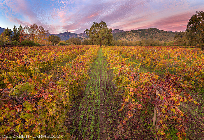 Autumn Dusk, Napa Valley