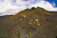 Kilauea Caldera, Hawaii Volcanoes National Park, Big Island of Hawaii, Hawaii, USA
