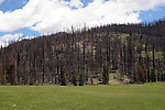WY: Wyoming, Yellowstone National Park..Firescape, recovery from 2003 East Fire.Photo #: yellow824..Photo copyright Lee Foster, 510/549-2202, lee@fostertravel.com, www.fostertravel.com..