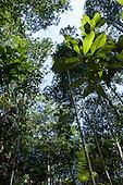 Amazon, Brazil.