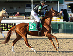 November 22, 2018 : English Affair (jockey Corey J. Lanerie, #5) wins the 45th running of the G3 Cardinal Handicap at Churchill Downs, Louisville, Kentucky. Owner Calumet Farm (Brad Kelley), trainer George R. Arnold II. By English Channel x Lady Melesi, by Colonial Affair. Mary M. Meek/ESW/CSM