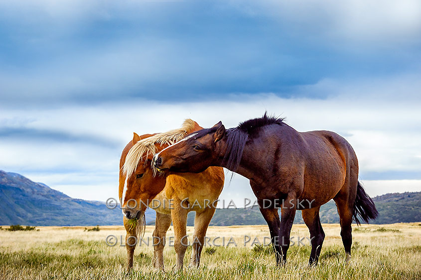 Horses in the wide open range, Patagonia Chile
