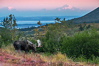 Fall landscape of Bull moose in powerline valley.  <br /> <br /> Photo by Jeff Schultz/SchultzPhoto.com  (C) 2018  ALL RIGHTS RESERVED