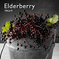 Elder Berry | Elderberries Pictures Photos Images & Fotos