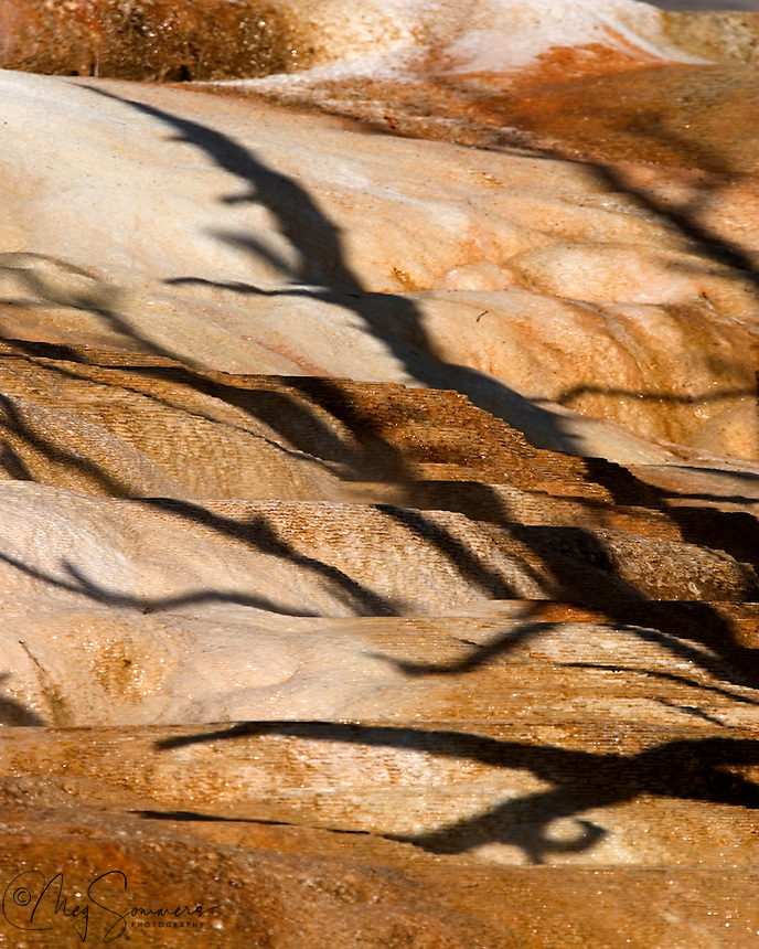 Shadows from the nearby skeleton trees are cast upon the creeping travertine which caused their demise. Angel Terrace, Mammoth Hot Springs complex, Yellowstone National Park.