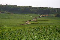 The road up towards Flagey Echezeaux in Vosne-Romanee, passing through the Richebourg and Romanee Saint Vivant vineyards