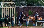 LOUISVILLE, KENTUCKY - APRIL 29: Flor de La Mar, trained by Bob Baffert, schools at the starting gate at Churchill Downs in Louisville, Kentucky on April 29, 2019. Scott Serio/Eclipse Sportswire/CSM