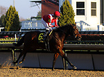 November 22, 2018 : Prado's Sweet Ride (jockey Florent Geroux, #6) wins the 103rd running of the G2 Falls Cityl Handicap at Churchill Downs, Louisville, Kentucky. Owner Darrell and Sadie Brommer, trainer Chris M. Bloxk. By Fort Prado x Excellent Idea, by General Meeting. Mary M. Meek/ESW/CSM