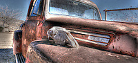 Old Ford Truck with skull - Route 66 - Arizona - Hackberry