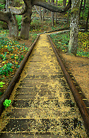 769550349 a boardwalk meanders through the trees and native plants of the temperate rainforest in devils churn state park along the oregon coast