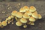 Clump of tiny mushrooms