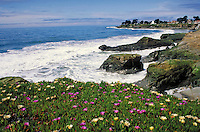 coastal homes and flowering ice plant with ocean background along California Coast Highway 101. Santa Cruz California, Pacific coast.