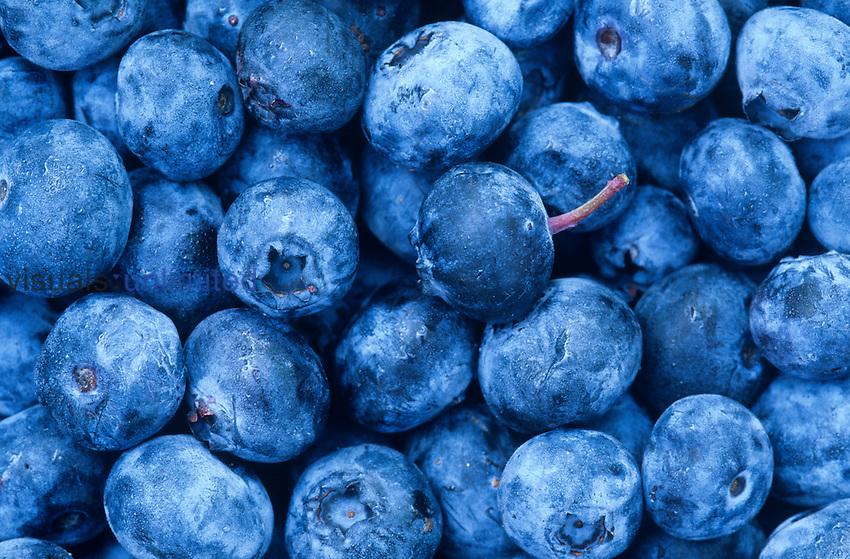 Highbush Blueberries (Vaccinium corymbosum).