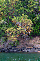 WASJ_D190 - USA, Washington, San Juan Islands, Orcas Island, Forest of Douglas fir and Pacific madrone above rocky shoreline at West Beach.