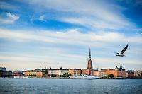 Riddarfjärden med flygande fiskmås över  Riddarholmen i Stockholm