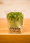Close up of salad cress growing inside plastic  container