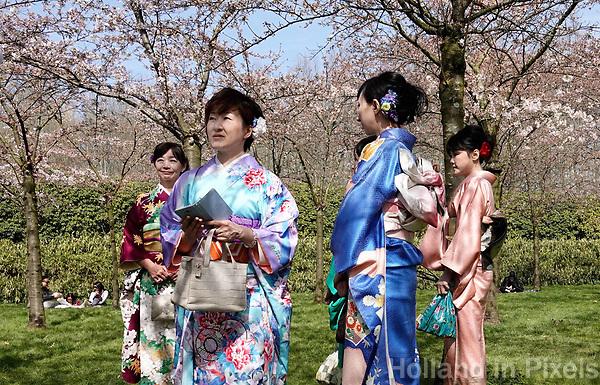 Nederland - Amstelveen - 2018. Cherry Blossom Festival in het Amsterdamse Bos . Het Japanse Hanami Matsuri (Kersenbloesem festival) markeert de start van de lente. De gemeente Amstelveen organiseert dit festival voor de Japanse gemeenschap, als dank voor de schenking van 400 kersenbomen in 2000. Foto Berlinda van Dam / Hollandse Hoogte